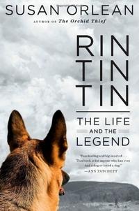 [Suntingan Terjemahan] Bab 1 Rin TinTin